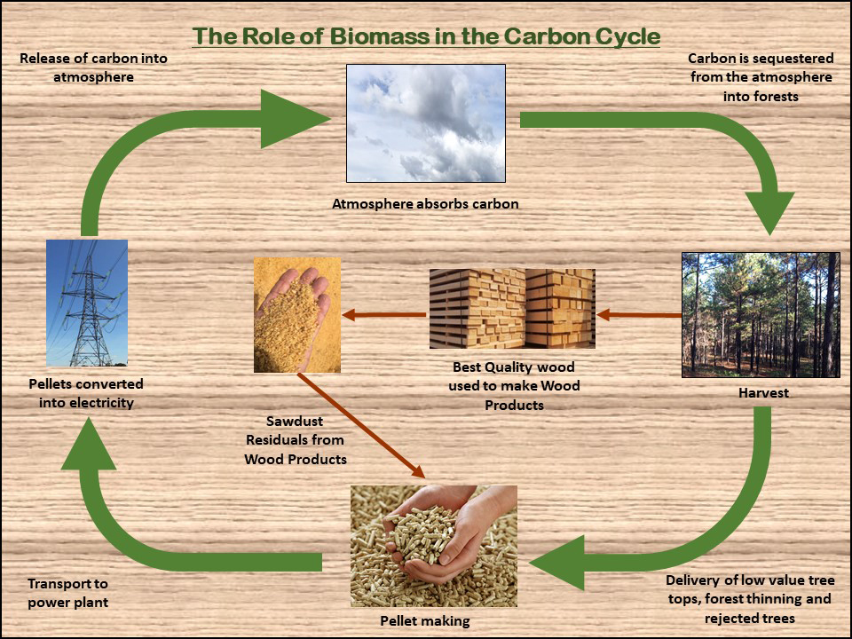 The Role of Biomass in the Carbon Cycle Infographic